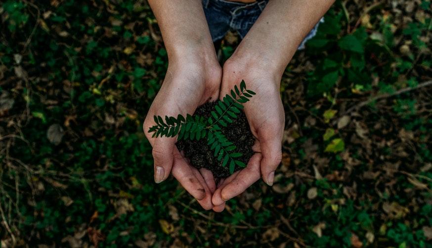 como-é-produzida-a-fibra-de-bambu-e-o-modal-sustentabilidade