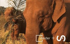 Insider e Santuário dos Elefantes Brasil