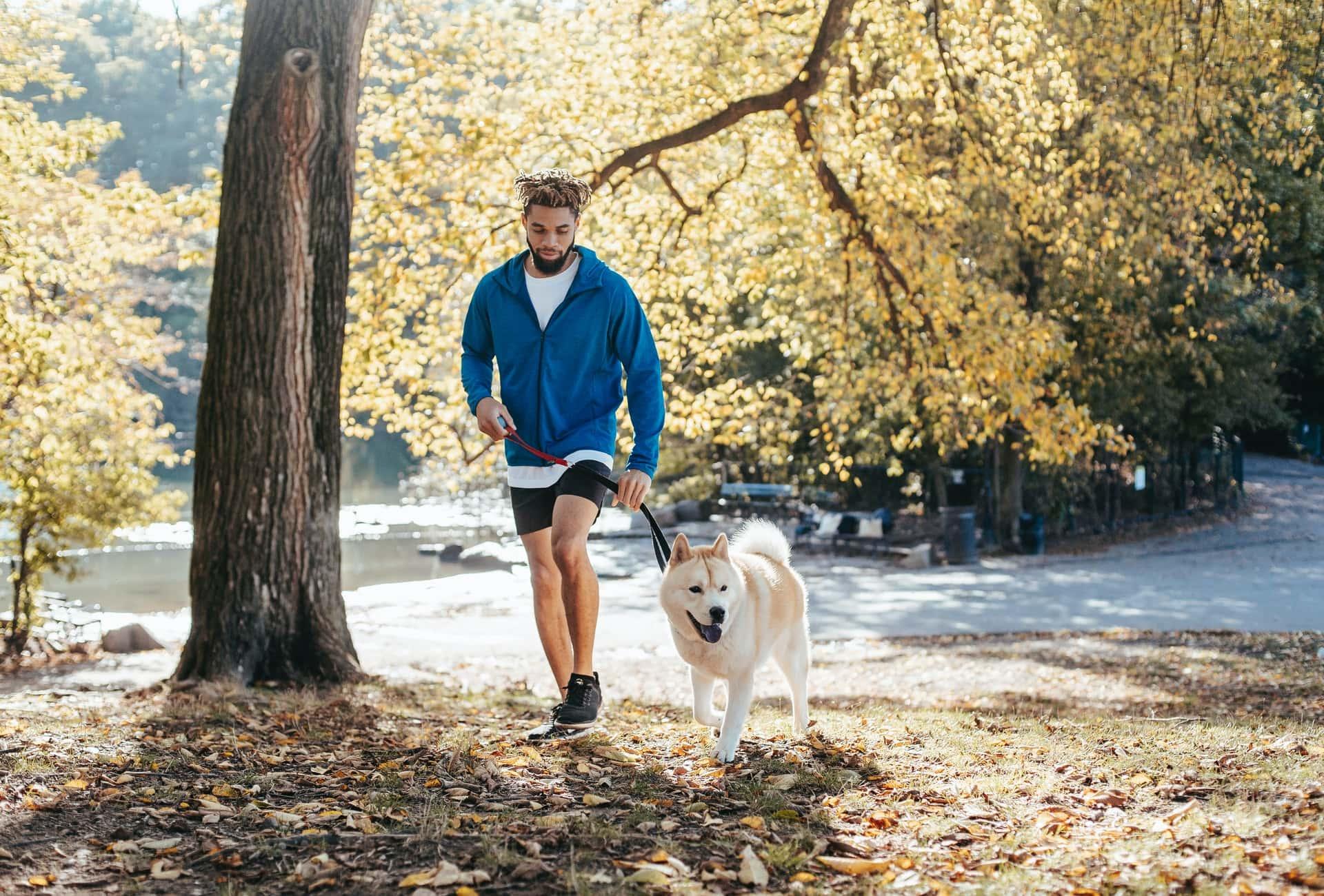 benefícios da caminhada com pet